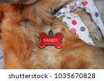dog name collar | Shutterstock . vector #1035670828