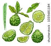sliced bergamot orange fruit ... | Shutterstock .eps vector #1035681184