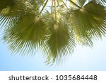 palm trees against blue sky ... | Shutterstock . vector #1035684448