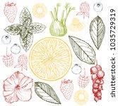 herbal tea. vector sketch ... | Shutterstock .eps vector #1035729319