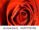 Stock photo red rose macro with water droplets on petals 1035735238