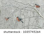 a flock of bullfinches ... | Shutterstock . vector #1035745264