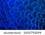 closeup peacock feathers ... | Shutterstock . vector #1035793099
