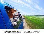 The Cute Beagle  Travels In Th...
