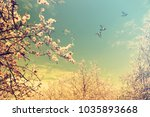 blooming spring orchard.... | Shutterstock . vector #1035893668