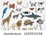 illustration drawing style of... | Shutterstock . vector #1035922198
