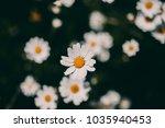 daisies vintage background ... | Shutterstock . vector #1035940453