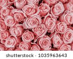 Stock photo floral background roses background 1035963643