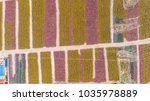 fields of plethora of shared...   Shutterstock . vector #1035978889