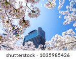 branch of cherry blossoms with... | Shutterstock . vector #1035985426