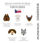 dogs by country of origin.... | Shutterstock .eps vector #1036004518