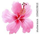 wildflower hibiscus pink flower ... | Shutterstock . vector #1036015813