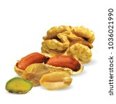fresh walnut  nutritious... | Shutterstock .eps vector #1036021990