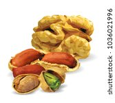 fresh walnut  nutritious... | Shutterstock .eps vector #1036021996