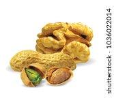 fresh walnut  nutritious... | Shutterstock .eps vector #1036022014