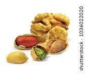 fresh walnut  nutritious... | Shutterstock .eps vector #1036022020