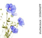 beautiful flowers of flax... | Shutterstock . vector #103604699