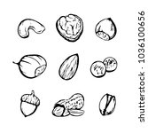 collection of nuts. hand drawn... | Shutterstock .eps vector #1036100656