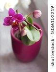 window flower background   Shutterstock . vector #1036102219