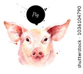 watercolor hand drawn pig head... | Shutterstock . vector #1036104790