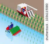 rice planting and rice reaping | Shutterstock .eps vector #1036115080