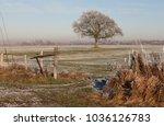 Isolated Big Oak Tree On A...
