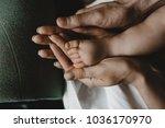 tiny feet of newborn baby in... | Shutterstock . vector #1036170970
