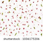 pink flowers and peach petals... | Shutterstock . vector #1036175206