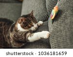 Stock photo cute cat playing with toy at home 1036181659