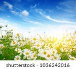 field of daisies  blue sky and... | Shutterstock . vector #1036242016