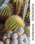 still life color macro portrait ... | Shutterstock . vector #1036263616