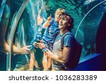 father and son looking at fish... | Shutterstock . vector #1036283389