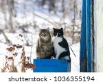 portrait of two funny cute cat sitting outside on a Sunny spring day