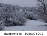 winter forest. winter seasonal... | Shutterstock . vector #1036376206
