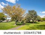 the majestic kuirau park in... | Shutterstock . vector #1036451788