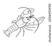 lobster wildlife animal  hand... | Shutterstock .eps vector #1036453450