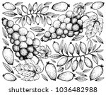 berry fruits  illustration... | Shutterstock .eps vector #1036482988