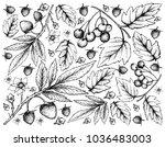 berry fruit  illustration... | Shutterstock .eps vector #1036483003