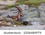 ibex  range of mont blanc.... | Shutterstock . vector #1036484974