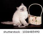 Fluffy Kitten Of The Nevskaya...