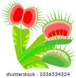 leaves of venus flytrap or... | Shutterstock .eps vector #1036534324