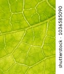 Small photo of Leaf texture as background / A leaf is an organ of a vascular plant and is the principal lateral appendage of the stem.