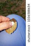 women's hand holding arrowhead... | Shutterstock . vector #1036588654