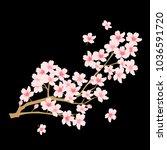 cherry blossoms spring flower... | Shutterstock .eps vector #1036591720