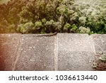 lizard sitting on brown stone... | Shutterstock . vector #1036613440