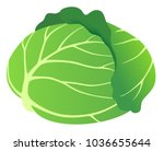 fresh cabbage  isolated on... | Shutterstock .eps vector #1036655644