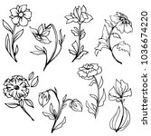 hand drawn flowers with leaves... | Shutterstock .eps vector #1036674220