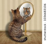 the cat looks at his reflection ... | Shutterstock . vector #1036683106