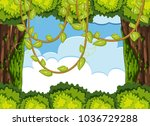 forest scene with tree and vine ... | Shutterstock .eps vector #1036729288