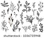 set of hand drawn leaves ... | Shutterstock .eps vector #1036735948